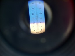 Image of brix reading on a refractometer
