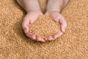 Grain Mills – A Must Have for Homebrewing
