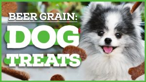 How to Make Spent Grain Dog Treats