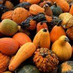 Mashing Pumpkins – How To Turn Post-Halloween Pumpkins Into Amazing Homebrew Beer Recipes